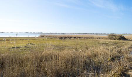 herd deer: Herd of red deer on a field along a lake