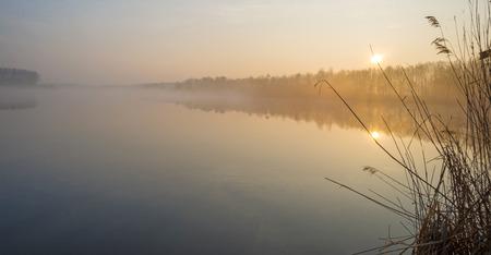 Reed along the shore of a lake at dawn photo