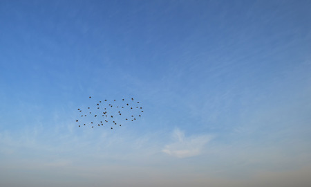 Flock of swallows flying in the sky photo