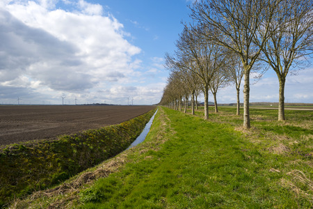 ditch: Row of trees along a ditch in spring Stock Photo