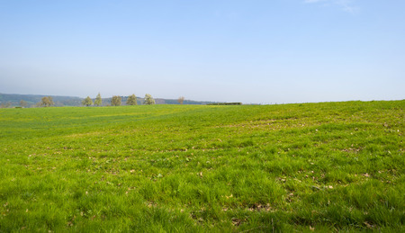 timeless: Panorama of a sunny green meadow on a hill
