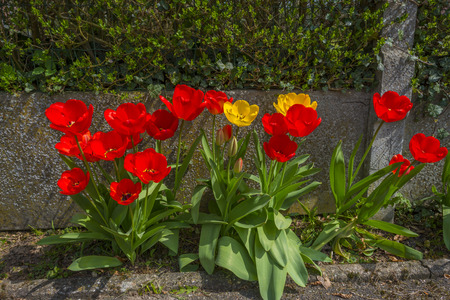 road side: Colorful tulips in sunlight on a road side Stock Photo