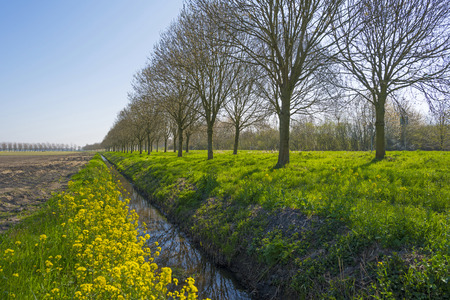 ditch: Yellow wildflowers along a ditch in spring Stock Photo