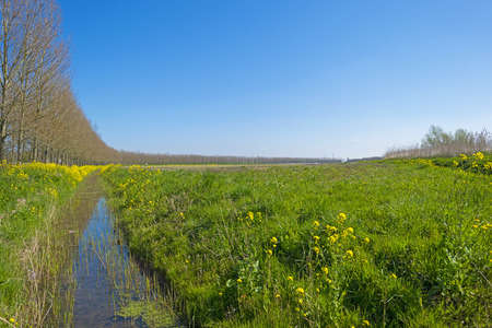 yellow wildflowers: Yellow wildflowers along a ditch in spring Stock Photo