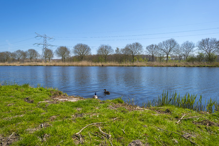 two ducks: Two ducks swimming in a sunny canal in spring Stock Photo