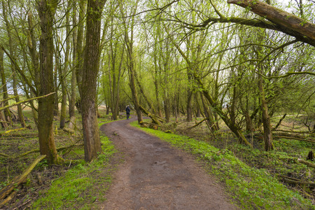dirt road recreation: Footpath through a forest in spring Stock Photo