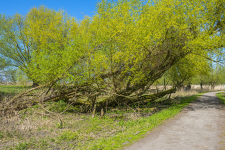 dirt road recreation: Footpath through a sunny forest in spring