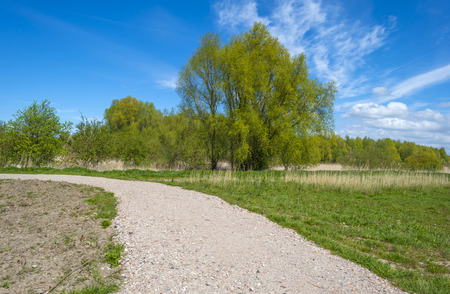 dirt road recreation: Footpath towards a sunny forest in spring Stock Photo