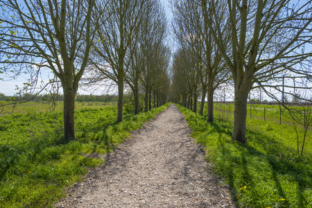 dirt road recreation: Footpath through a sunny trees in spring