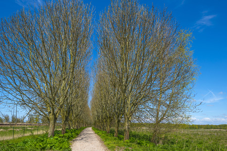 dirt road recreation: Footpath along sunny trees in nature in spring