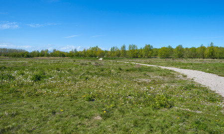 dirt road recreation: Footpath through a sunny meadow in spring