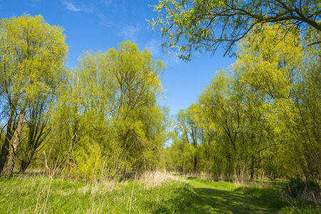 dirt road recreation: Green foliage of sunny trees in spring