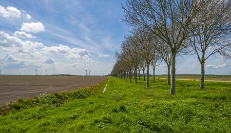 plowed field: Trees along a plowed field in spring