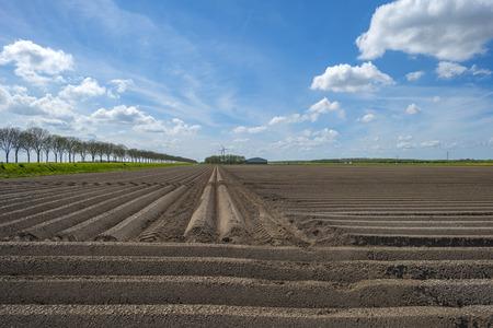 plowed field: Furrows in a sunny  plowed field in spring Stock Photo