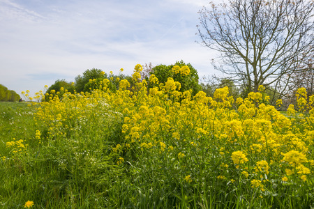 Yellow wild flowers in a sunny meadow