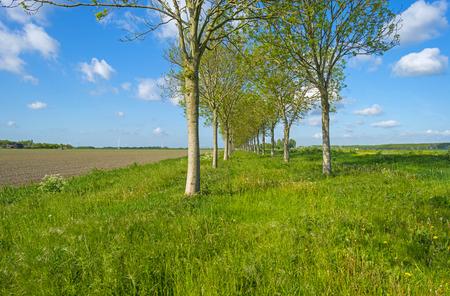 plowed field: Waving grass along a plowed field in spring Stock Photo
