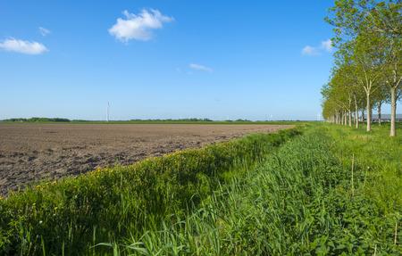 plowed field: Waving reed along a plowed field in spring Stock Photo