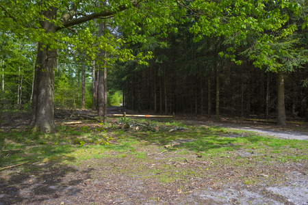 timberland: Footpath through a forest in spring Stock Photo