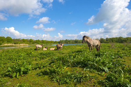 gloriole: Herd of horses in nature under a blue cloudy sky Stock Photo