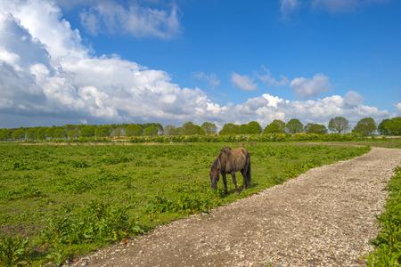 gloriole: Konik horse walking along a footpath in nature