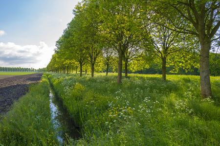 gloriole: Flores silvestres a lo largo de una zanja en primavera