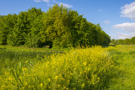 gloriole: Trees in a sunny meadow in spring Stock Photo