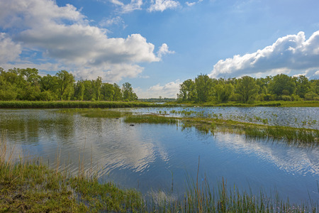 gloriole: The shore of a lake in sunny spring