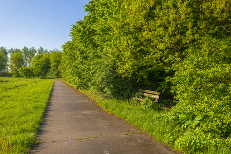 gloriole: Wooden bench amidst sunny trees in spring