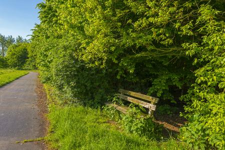 gloriole: Banco de madera en medio de �rboles de sol en primavera