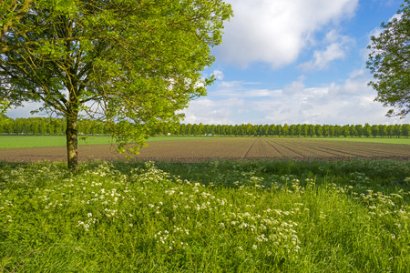 gloriole: Vegetables on a sunny field in spring Stock Photo