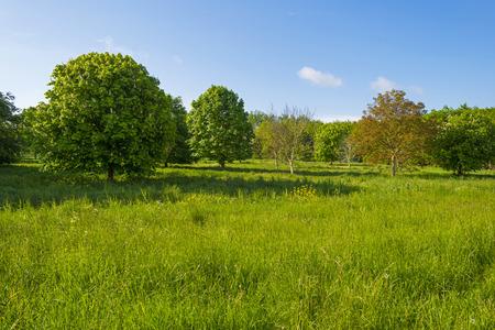 gloriole: Casta�os en un prado soleado en primavera