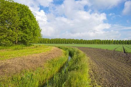 gloriole: Veh�culos en un campo soleado en primavera Foto de archivo