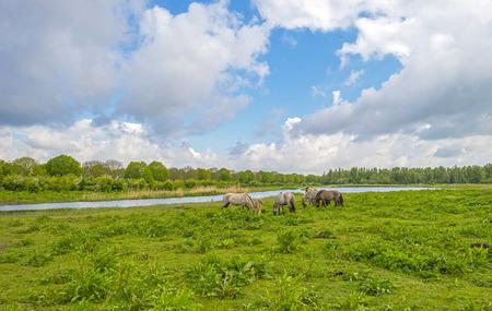 gloriole: Manada de caballos en la naturaleza bajo un cielo nublado azul