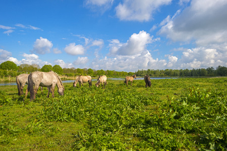 gloriole: Herd of horses in nature under a blue cloudy sky in spring Stock Photo
