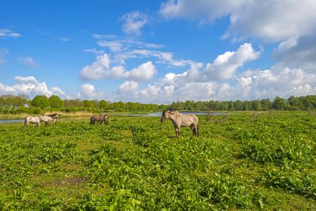 gloriole: Manada de caballos en la naturaleza bajo un cielo nublado azul en primavera