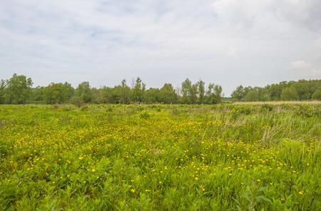 gloriole: Flores silvestres en un campo en primavera Foto de archivo
