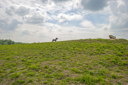 gloriole: Horse on top of a hill in spring