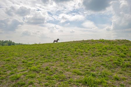 gloriole: Caballo en la cima de una colina en la primavera