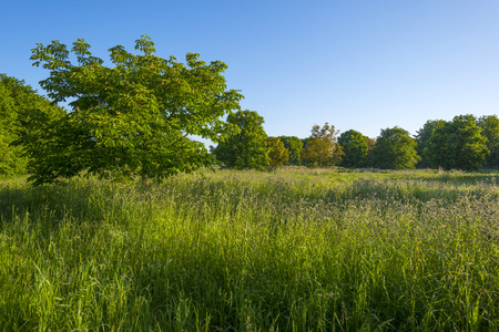 dewy: Field with trees and dewy grass at dawn in spring