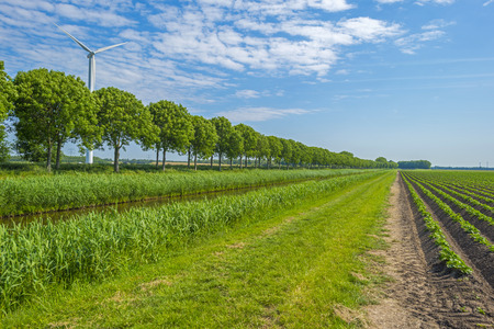 flevoland: Vegetables growing on a sunny field in spring