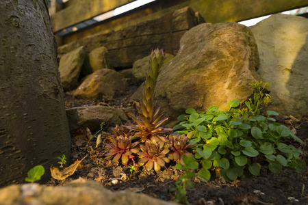 rockery: Rockery in the light of dawn in spring Stock Photo
