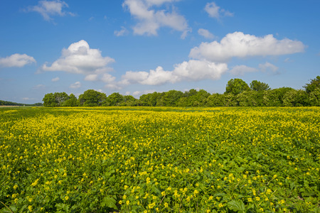 yellow wildflowers: Yellow wildflowers growing on a sunny field in spring Stock Photo