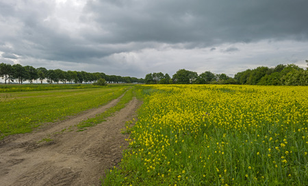 yellow wildflowers: Yellow wildflowers growing on a field in summer