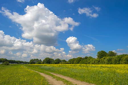 yellow wildflowers: Yellow wildflowers in a sunny field in summer Stock Photo