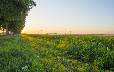 green fields: Canal through a sunny landscape in summer at sunrise