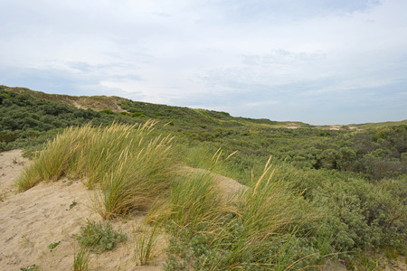 Dunes along the dutch coast in summer