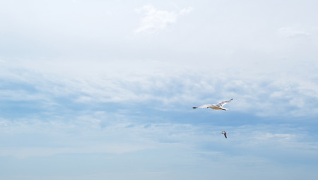 blue cloudy sky: Gull flying in a blue cloudy sky in summer Stock Photo