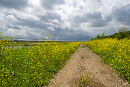 footpath: Wildflowers along the shore of a lake in summer
