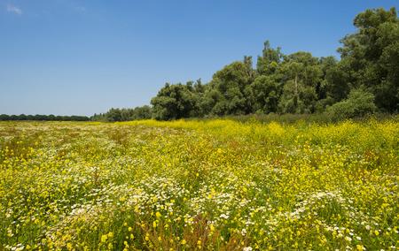 flevoland: Wildflowers in a field in summer Stock Photo