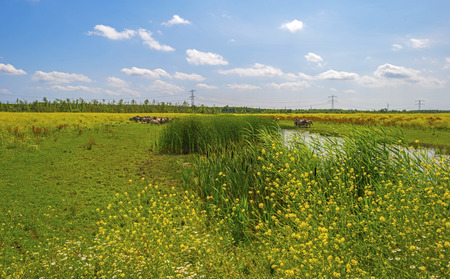 wildanimal: Herd of horses on the shore of a lake in a field with flowers